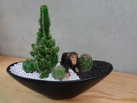 サボテン寄せ植え